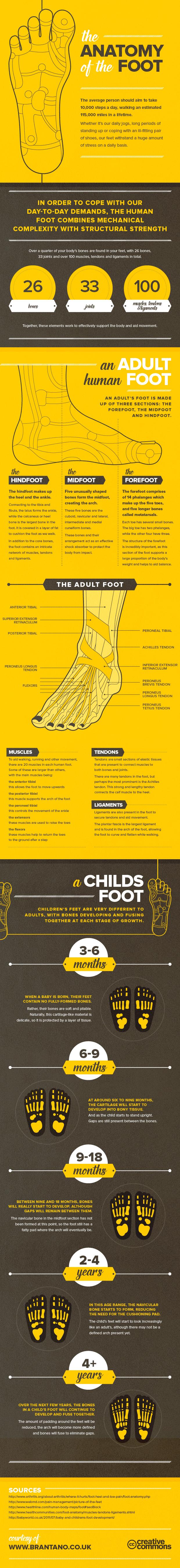 Brantano Anatomny of the Foot FINAL